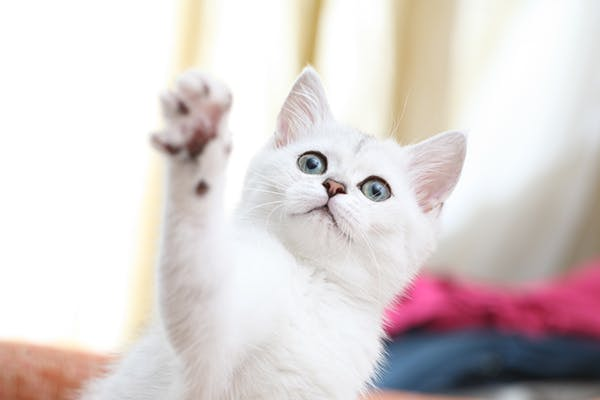 Aspiration Pneumonia in Cats - Symptoms, Causes, Diagnosis