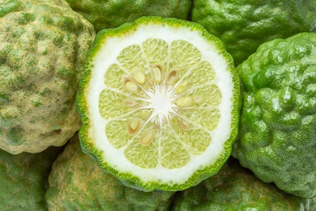 Bergamot Orange Poisoning in Cats - Symptoms, Causes, Diagnosis, Treatment, Recovery, Management, Cost