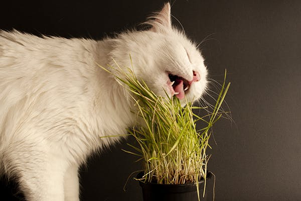 Bile Duct Inflammation In Cats Symptoms Causes
