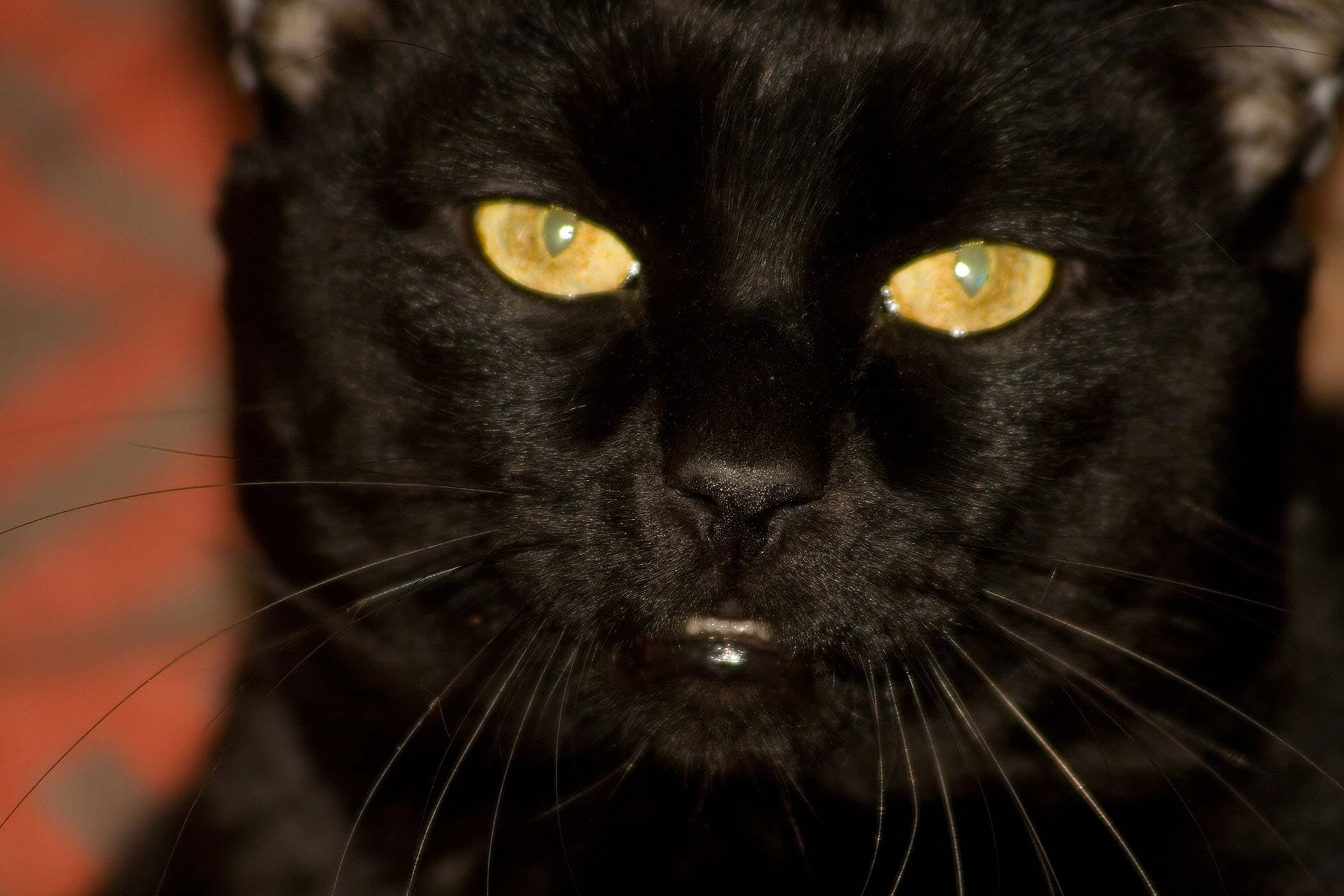 Worms in a cat: signs of infection with parasites