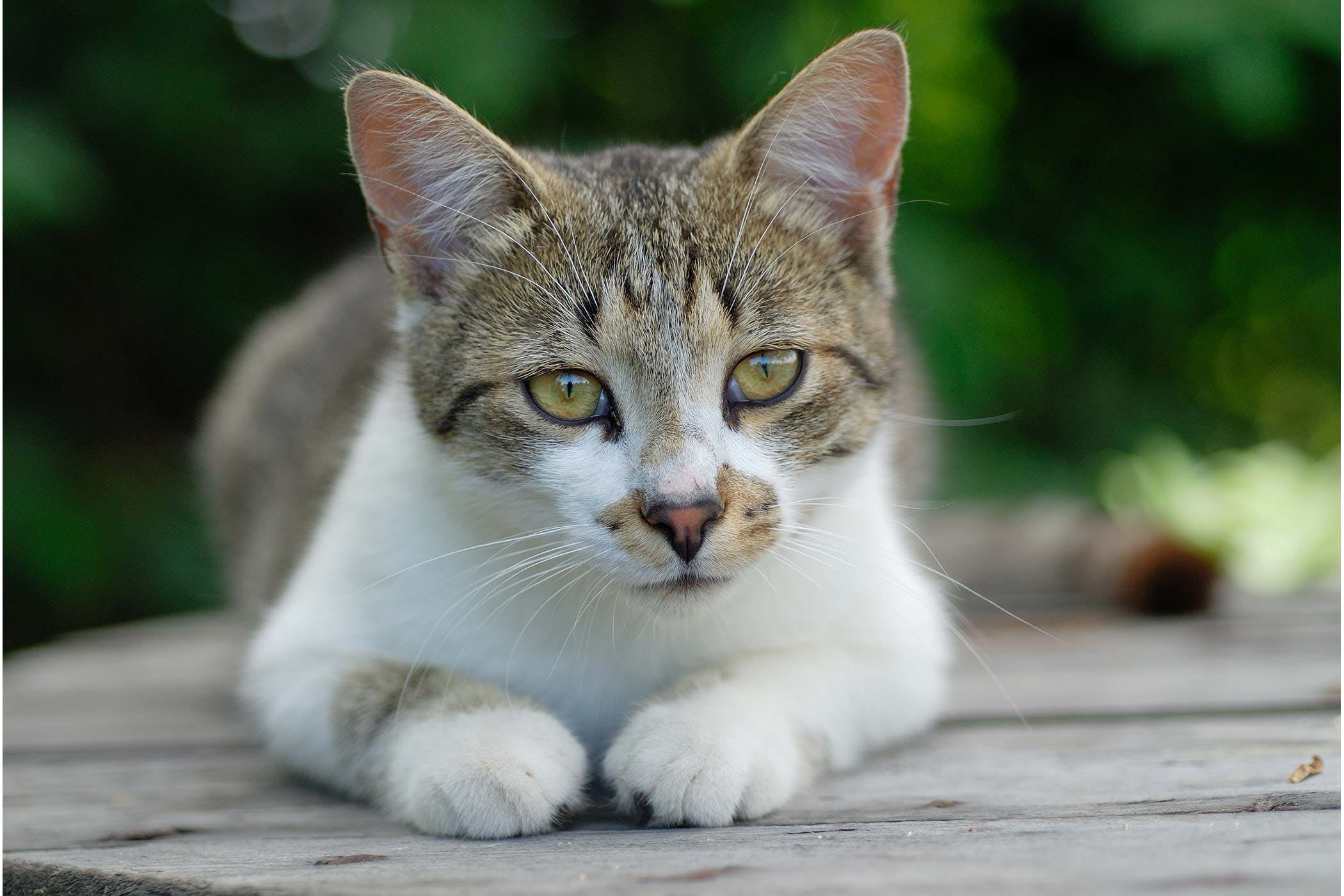 Cancer of the Uterus in Cats - Symptoms, Causes, Diagnosis