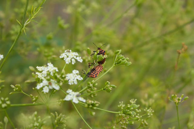 Caraway Poisoning in Cats - Symptoms, Causes, Diagnosis, Treatment, Recovery, Management, Cost
