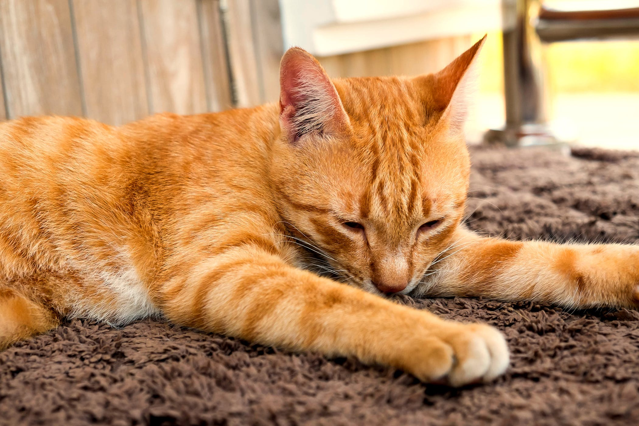 Carpet Allergy in Cats - Symptoms