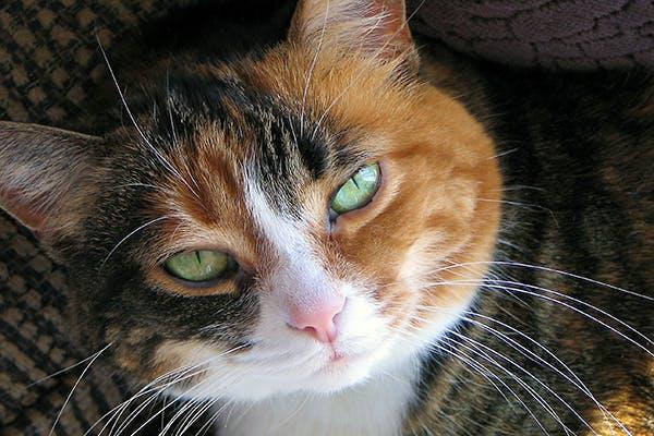 kitten has crusty eyes