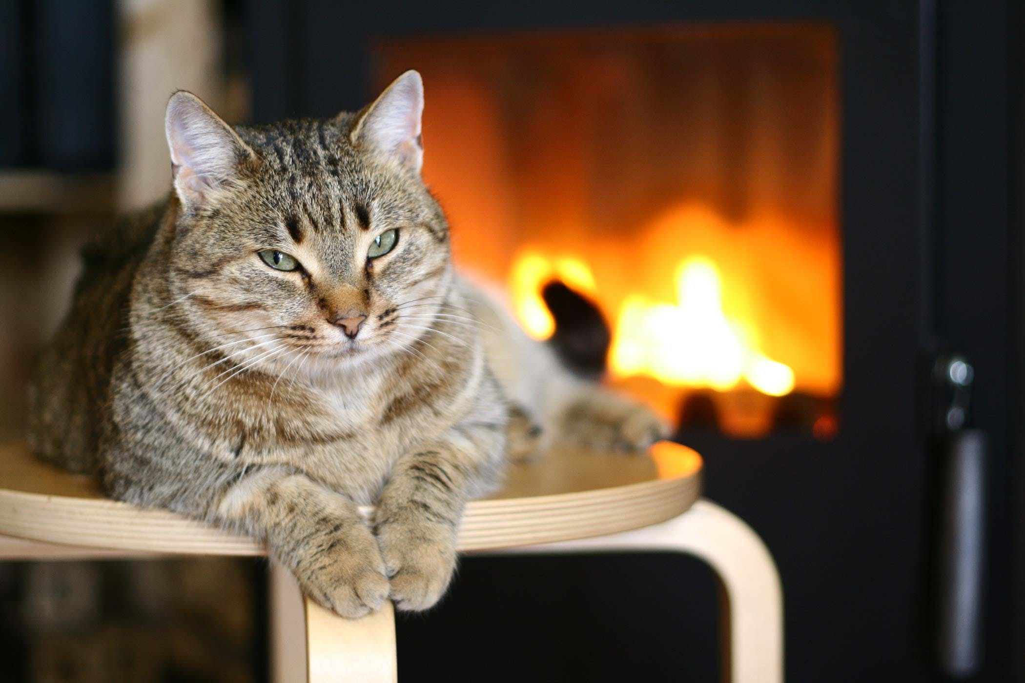 Colonic Ulcer in Cats