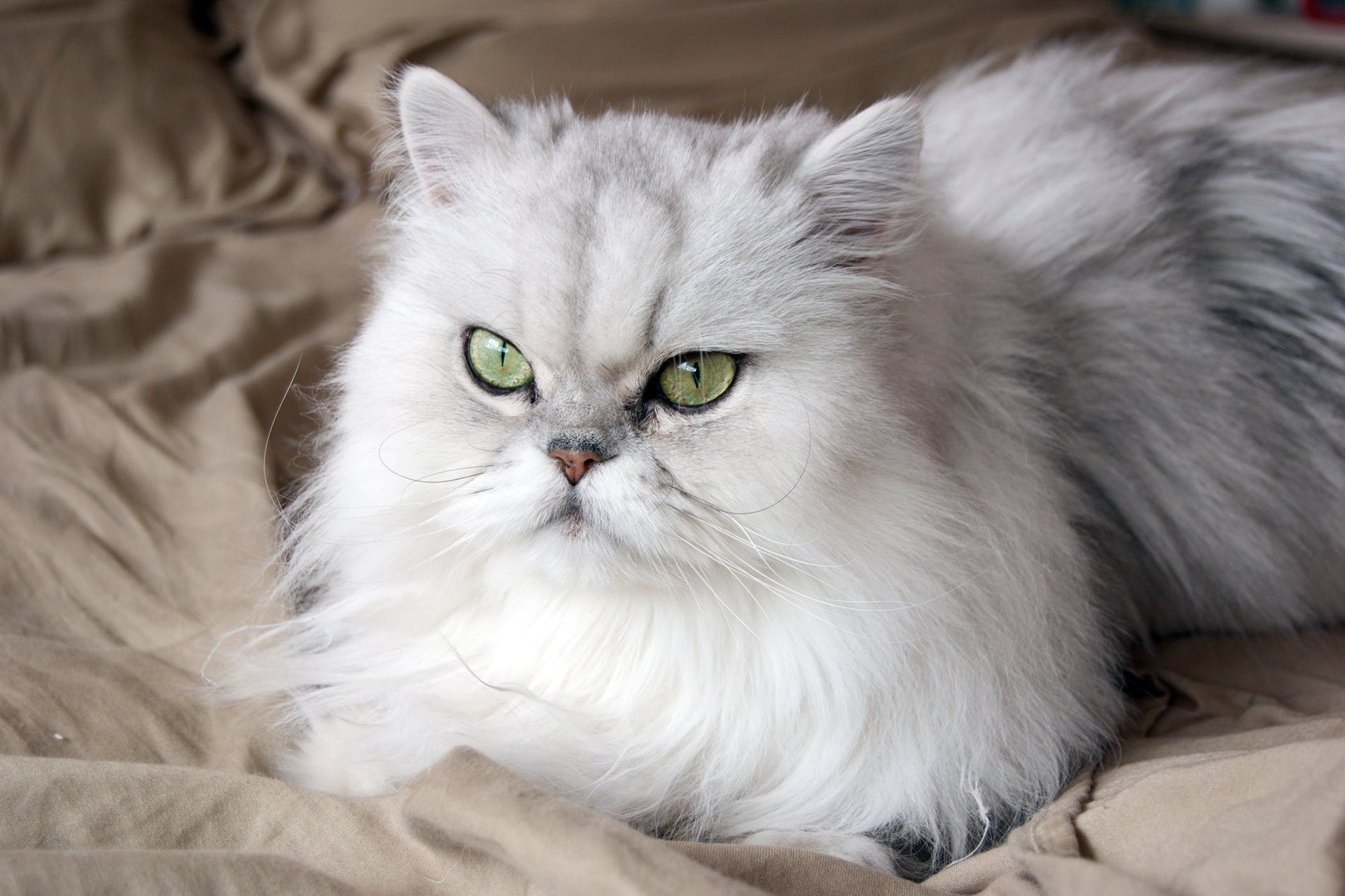 Cystic Biopsy in Cats - Procedure, Efficacy, Recovery, Prevention, Cost