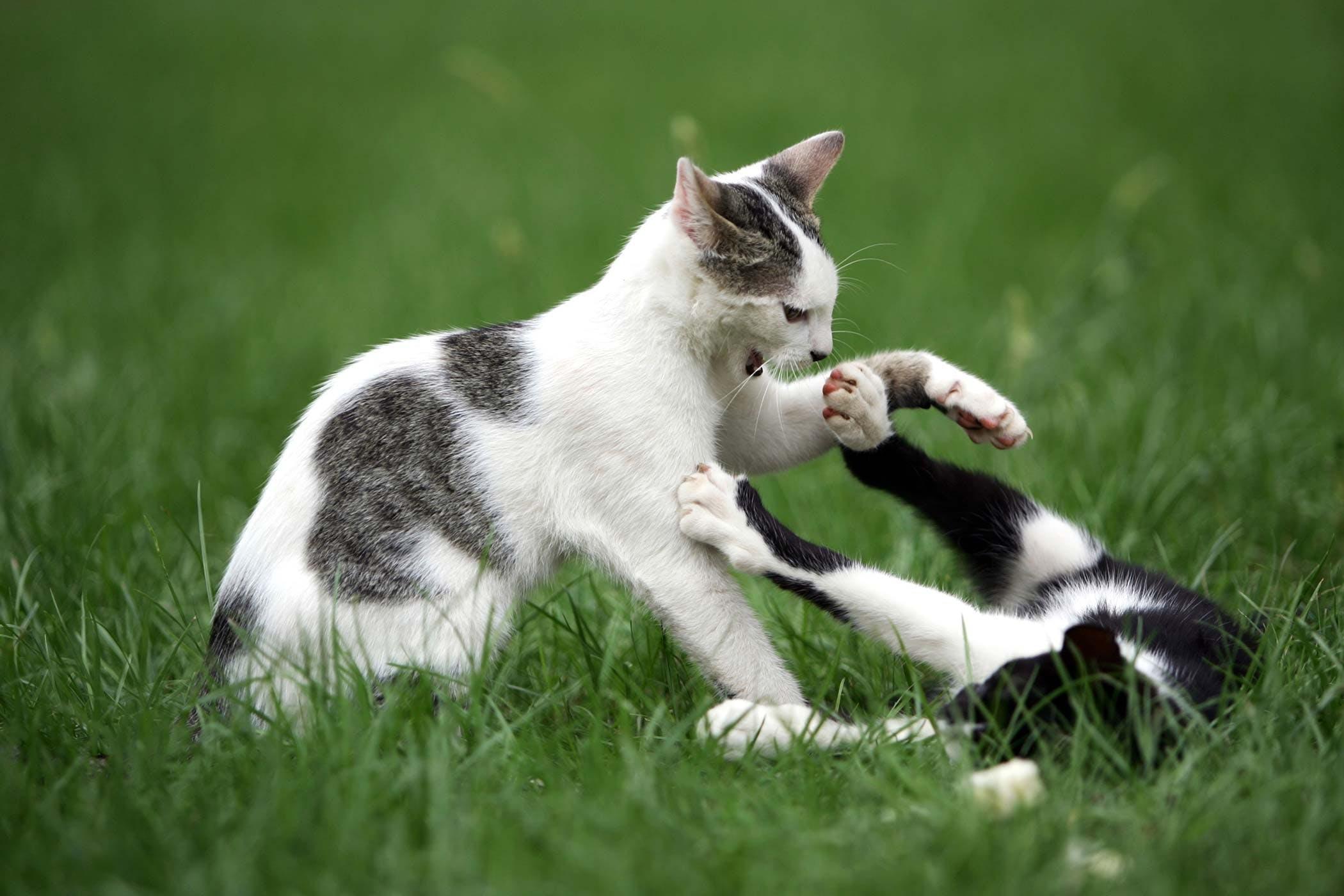 Destructive Behavior in Cats