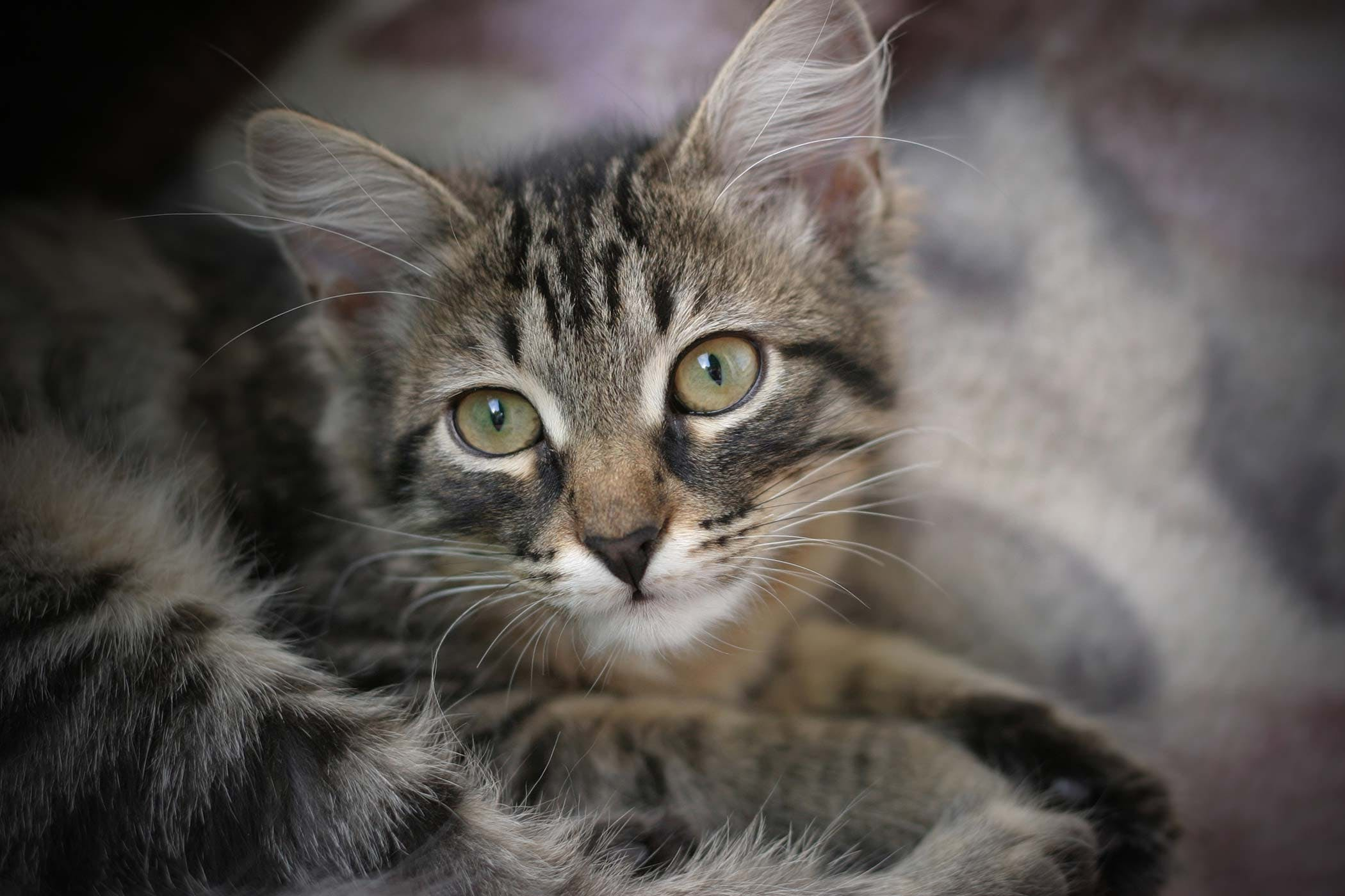 The cat has diarrhea. What to do and what means to use in such a case