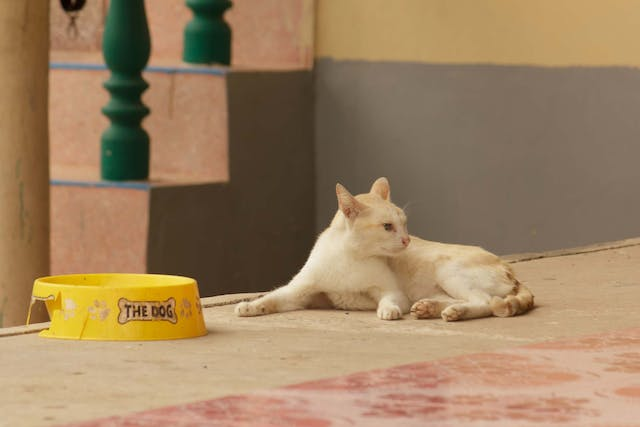Dietary Reactions in Cats - Symptoms, Causes, Diagnosis, Treatment, Recovery, Management, Cost