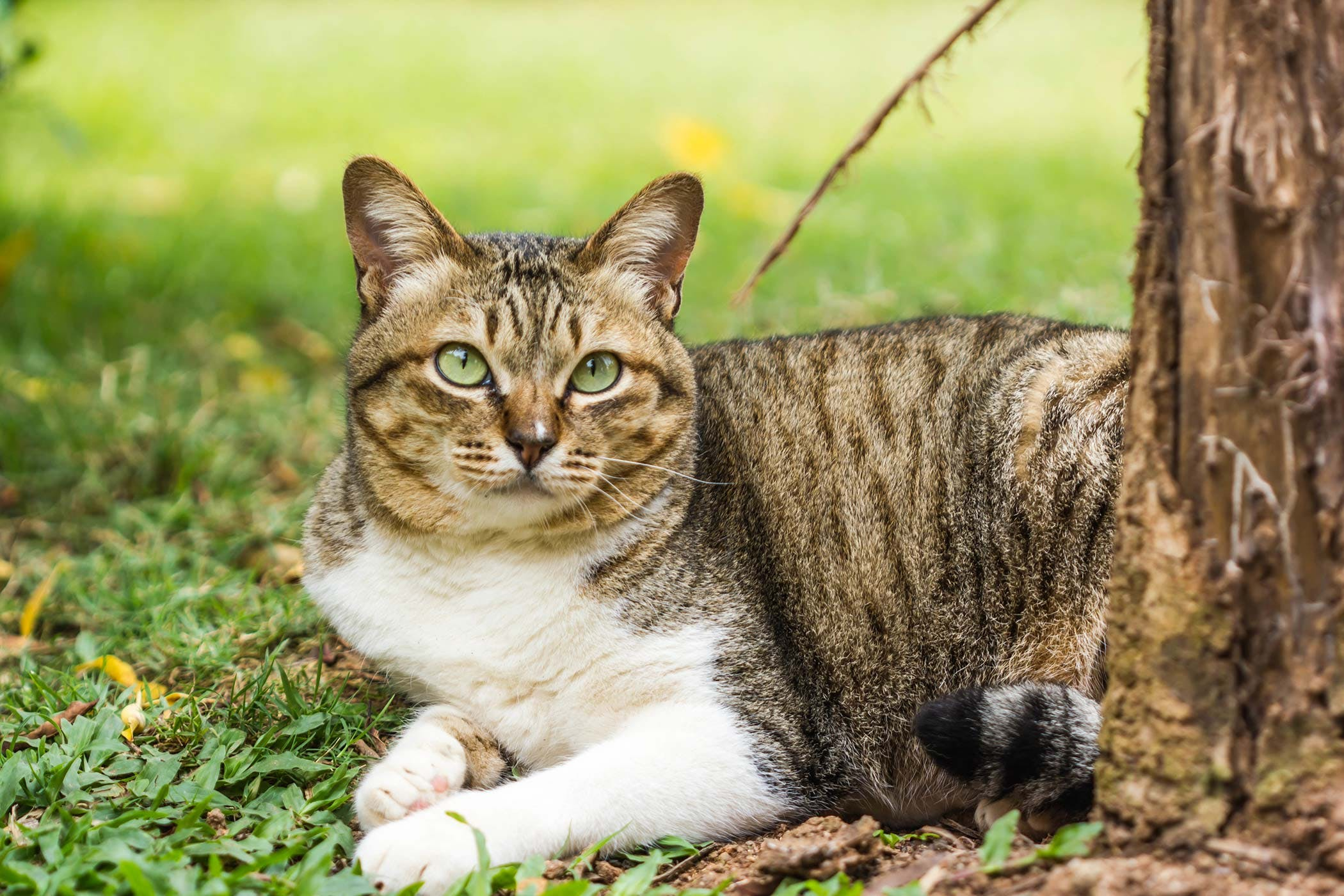 Electric Cord Bite Injury in Cats - Symptoms, Causes, Diagnosis ...