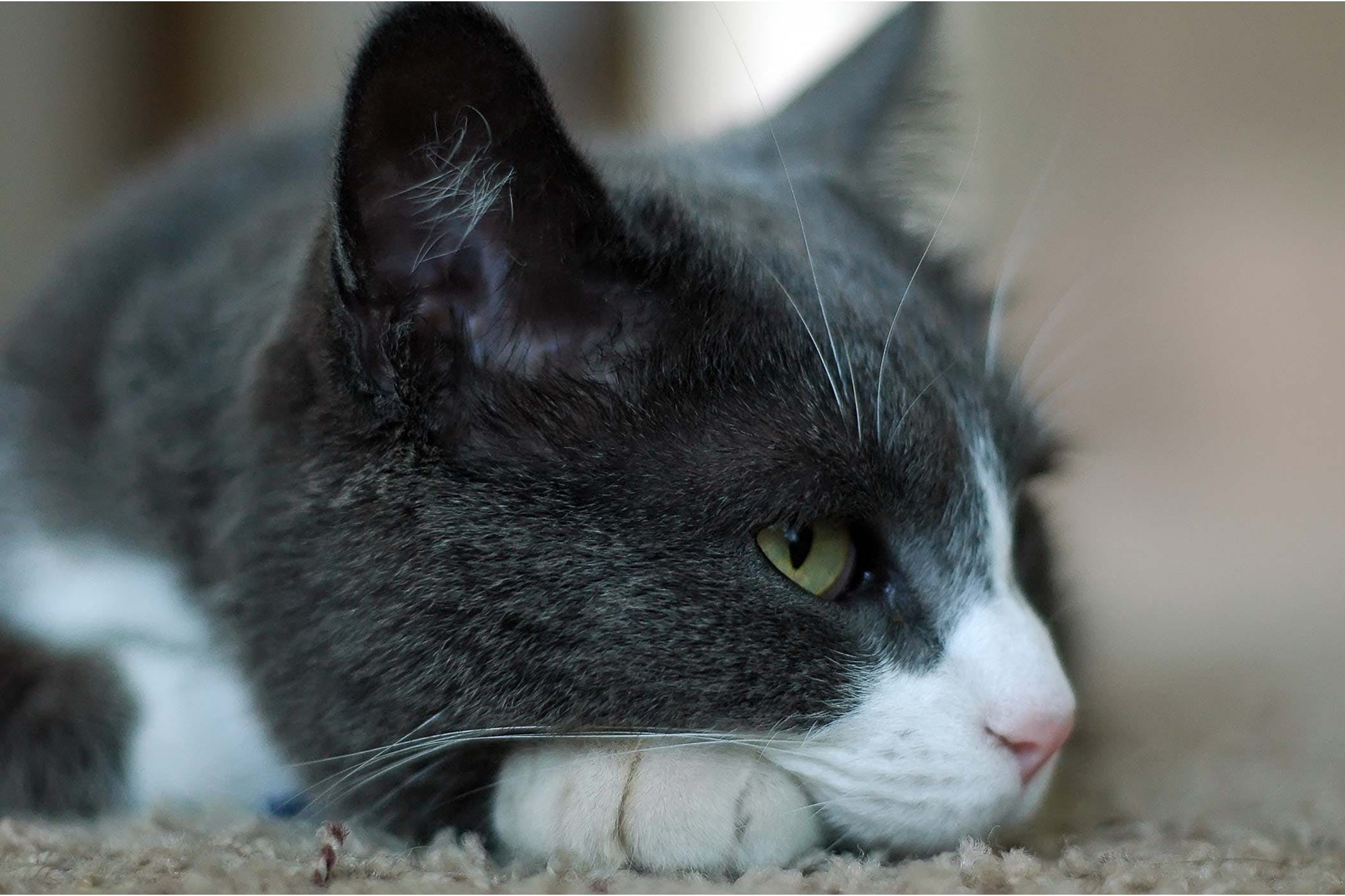 Electrolyte Disturbance in Cats