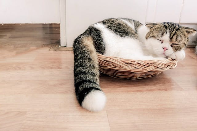 Erythromycin Allergy in Cats - Symptoms, Causes, Diagnosis, Treatment, Recovery, Management, Cost