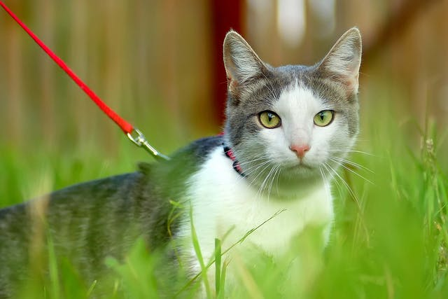 Excess Alkali in the Blood in Cats - Symptoms, Causes, Diagnosis, Treatment, Recovery, Management, Cost