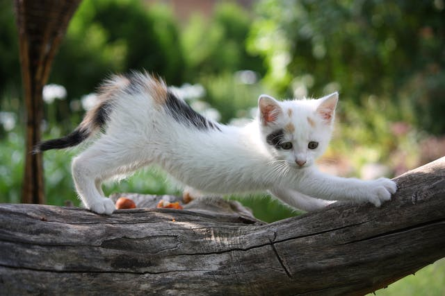 External Fixation in Cats - Conditions Treated, Procedure, Efficacy, Recovery, Cost, Considerations, Prevention