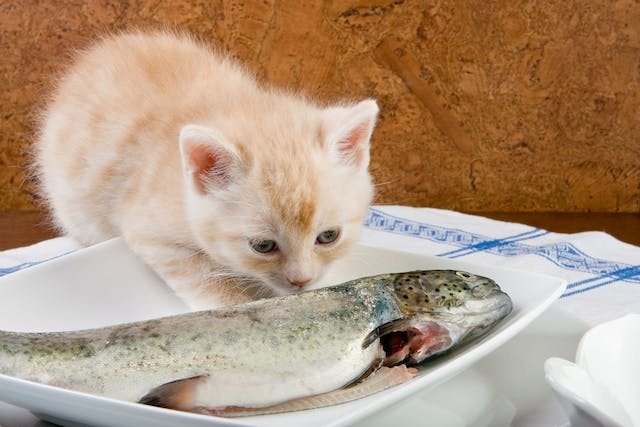 Fish Allergy in Cats - Symptoms, Causes, Diagnosis, Treatment, Recovery, Management, Cost