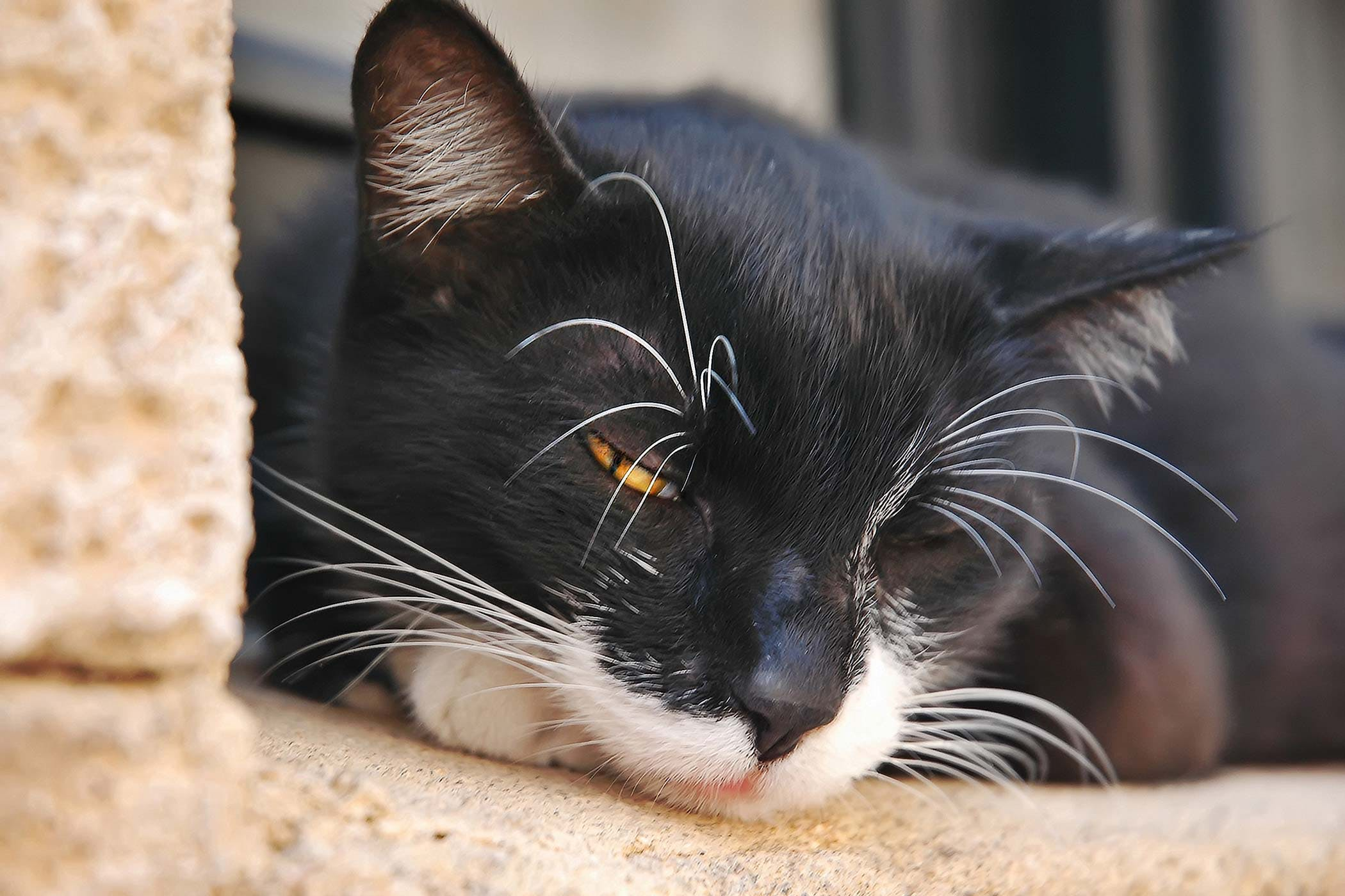 Fluid In The Abdomen in Cats - Symptoms, Causes, Diagnosis ...