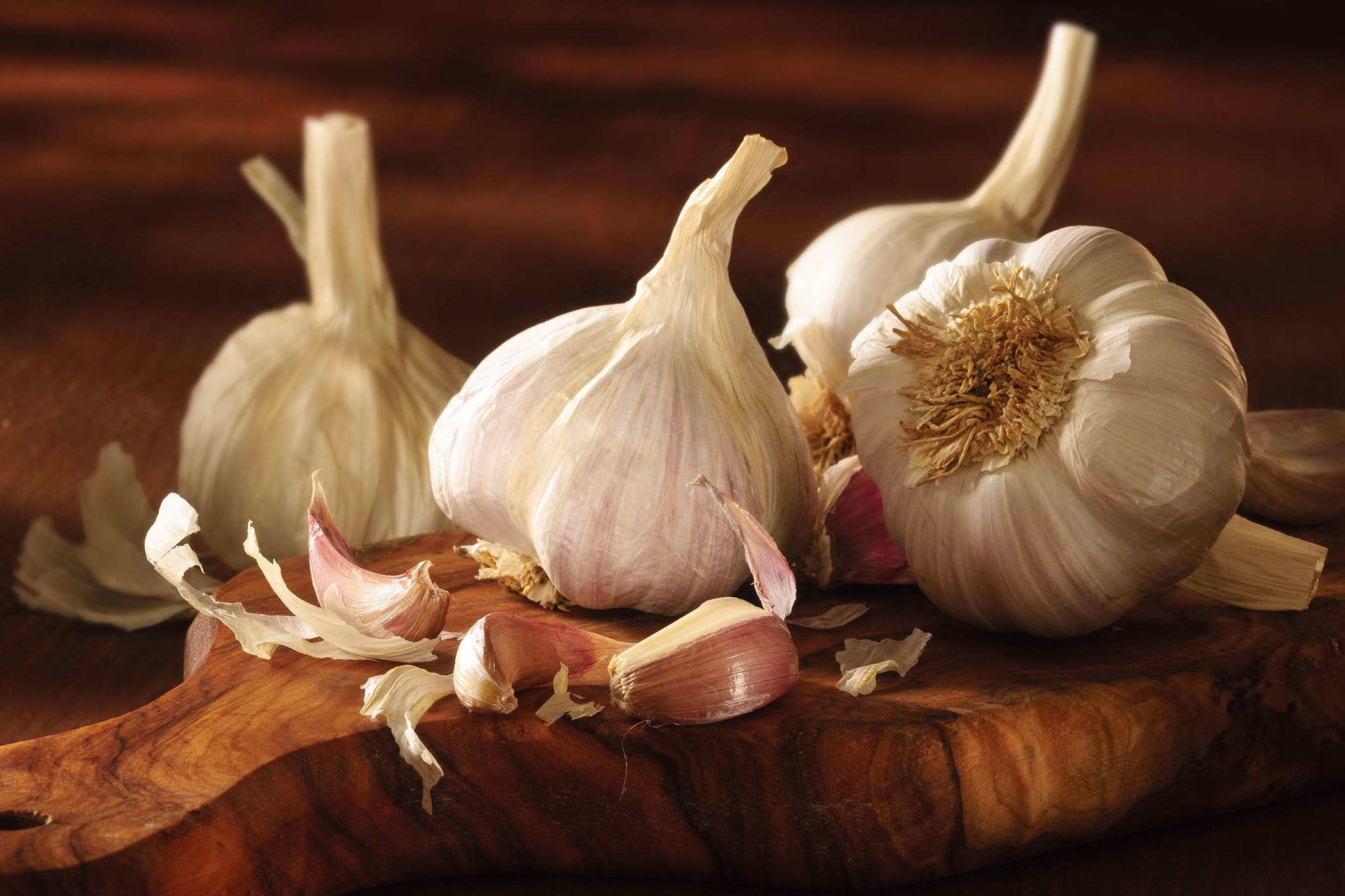 Garlic Poisoning in Cats - Symptoms, Causes, Diagnosis