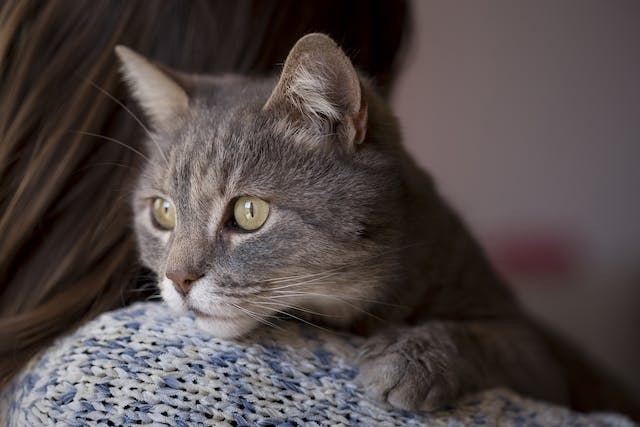 Gastric Lavage in Cats - Conditions Treated, Procedure, Efficacy, Recovery, Cost, Considerations, Prevention