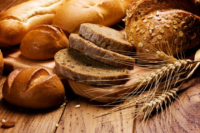 Gluten Allergy in Cats - Symptoms, Causes, Diagnosis, Treatment, Recovery, Management, Cost