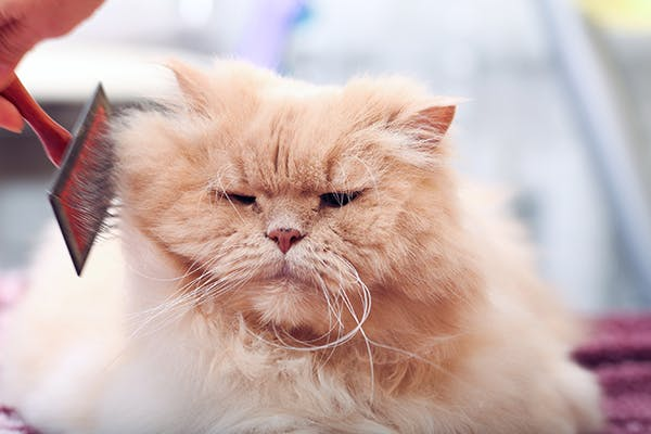 Hair Follicle Tumors in Cats