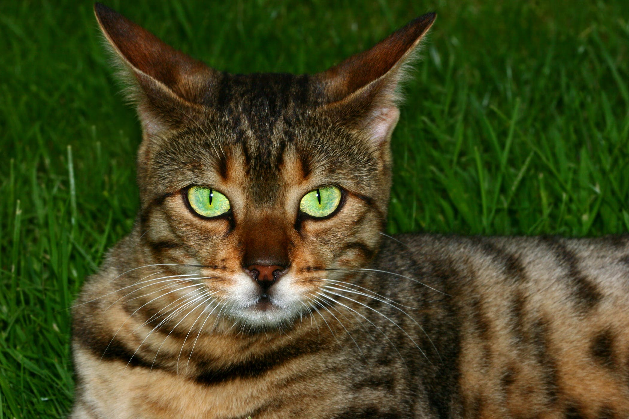 Hearing Loss in Cats