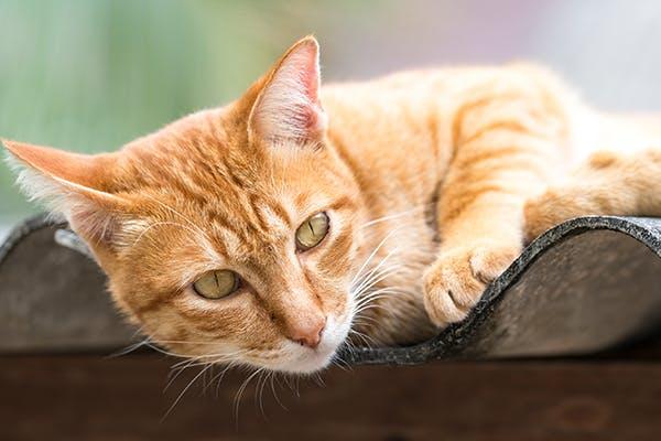hernia cat