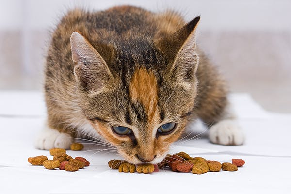 Reasons For High Cholesterol In Cats