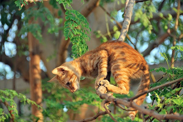 Highrise Syndrome in Cats - Symptoms, Causes, Diagnosis, Treatment, Recovery, Management, Cost