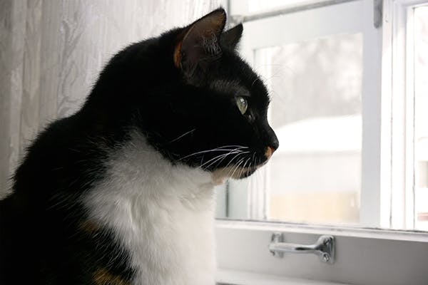 House Soiling in Cats - Symptoms, Causes, Diagnosis, Treatment, Recovery, Management, Cost