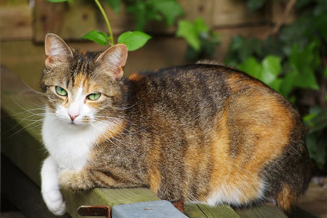 Immunotherapy in Cats - Conditions Treated, Procedure, Efficacy, Recovery, Cost, Considerations, Prevention