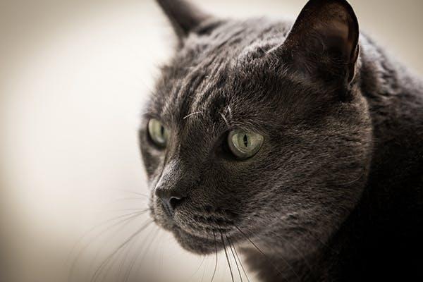 Kidney Stones In Cats Symptoms