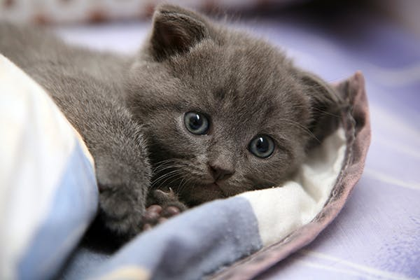 Lack of Bladder Control in Cats - Symptoms, Causes, Diagnosis