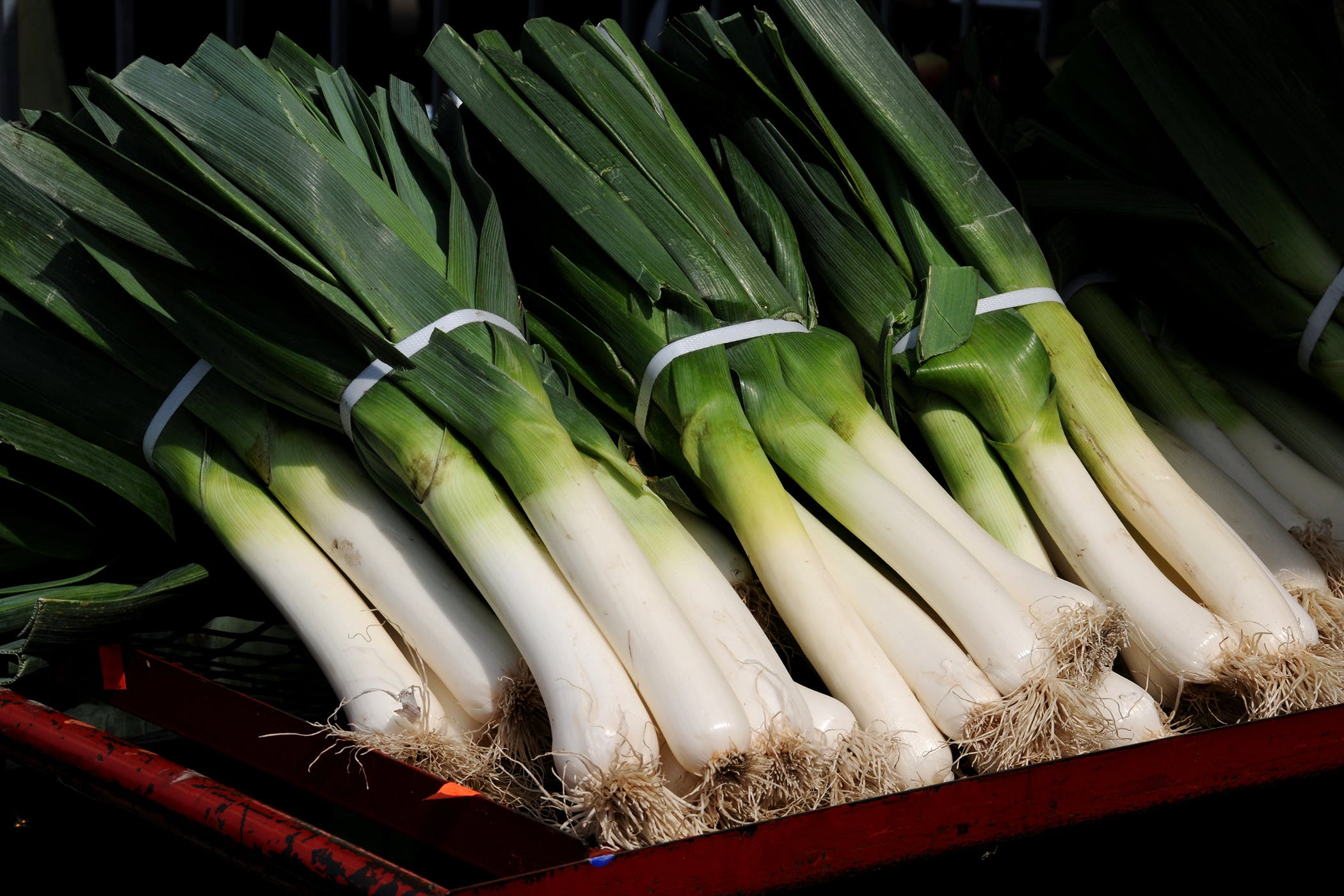 leek poisoning in cats