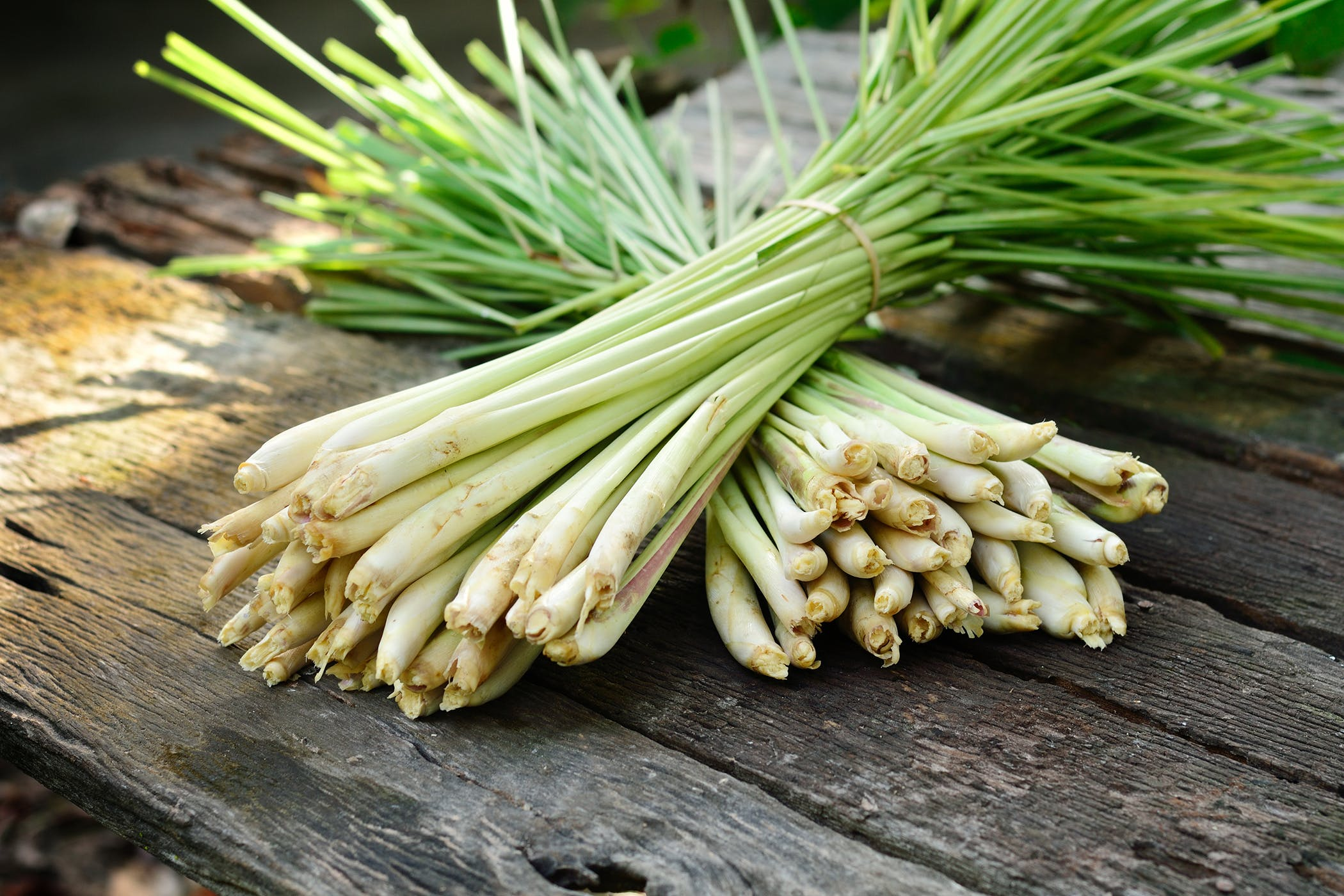 Lemongrass Poisoning in Cats - Symptoms, Causes, Diagnosis