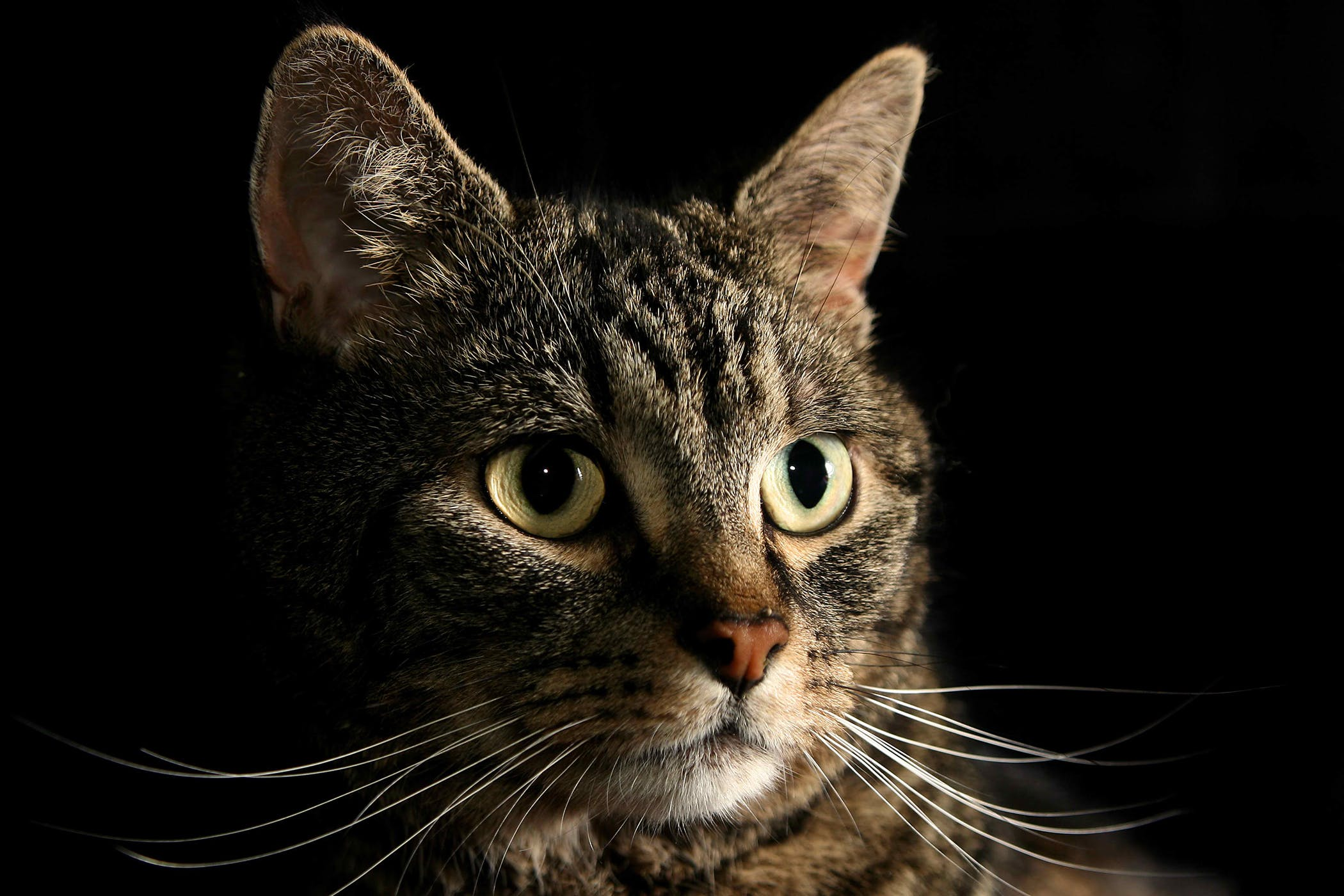 Deficiency in cats symptoms causes diagnosis treatment magnesium deficiency in cats buycottarizona