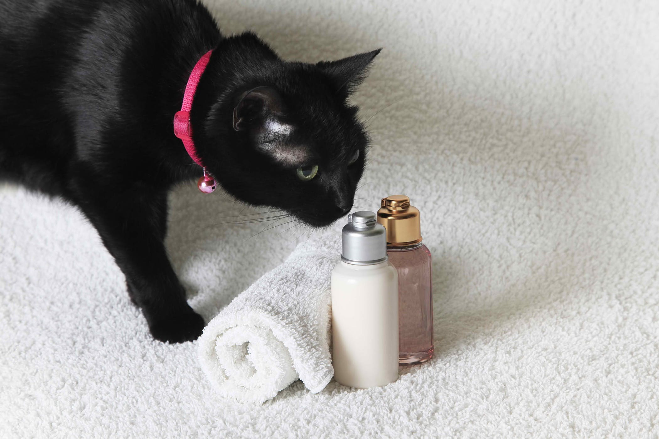 Medicated Shampoo or Dip in Cats - Procedure, Efficacy