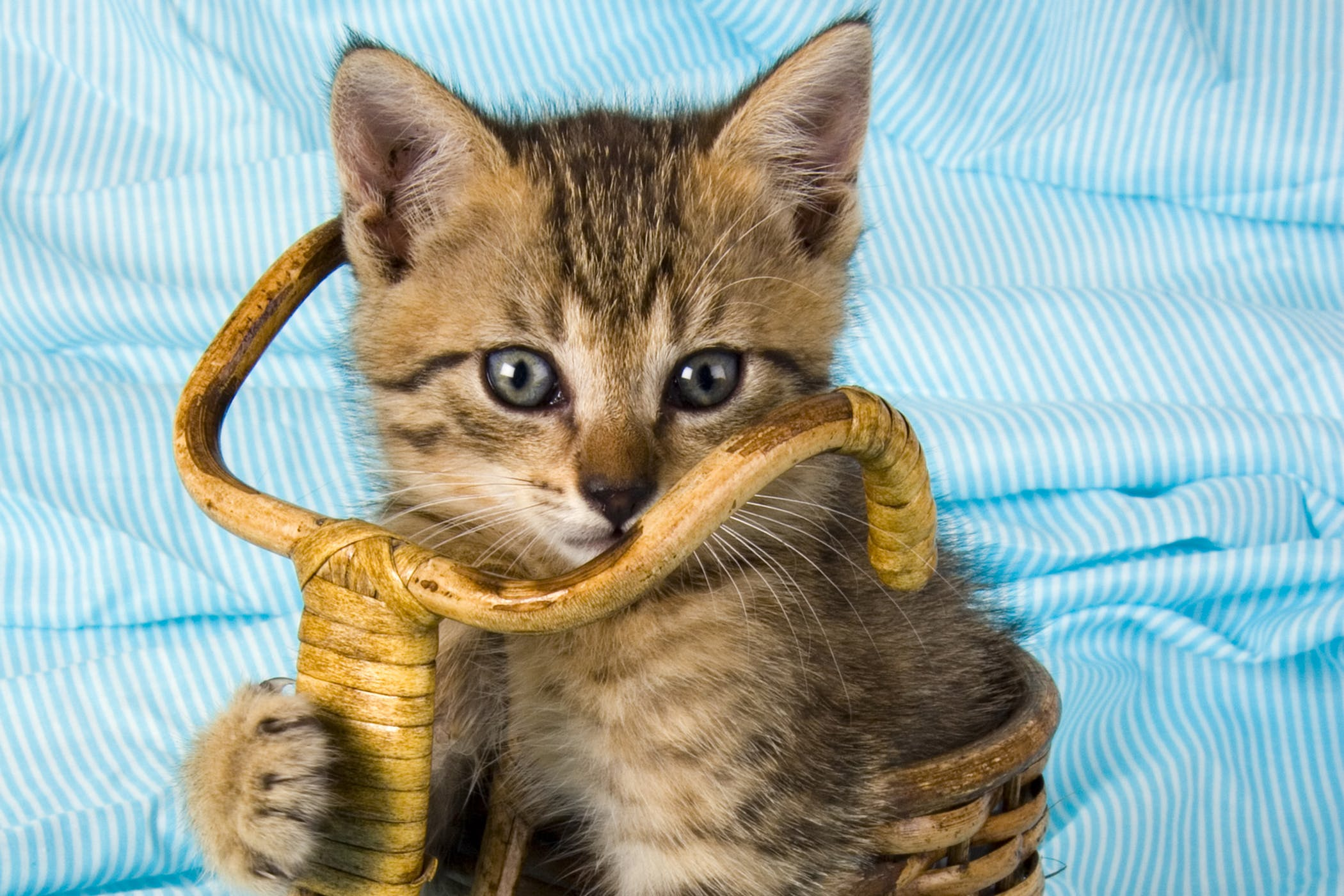 Methemoglobinemia in Cats