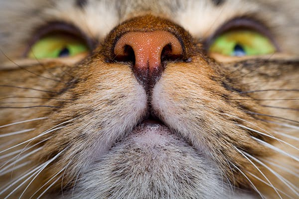Noisy Breathing in Cats - Symptoms, Causes, Diagnosis