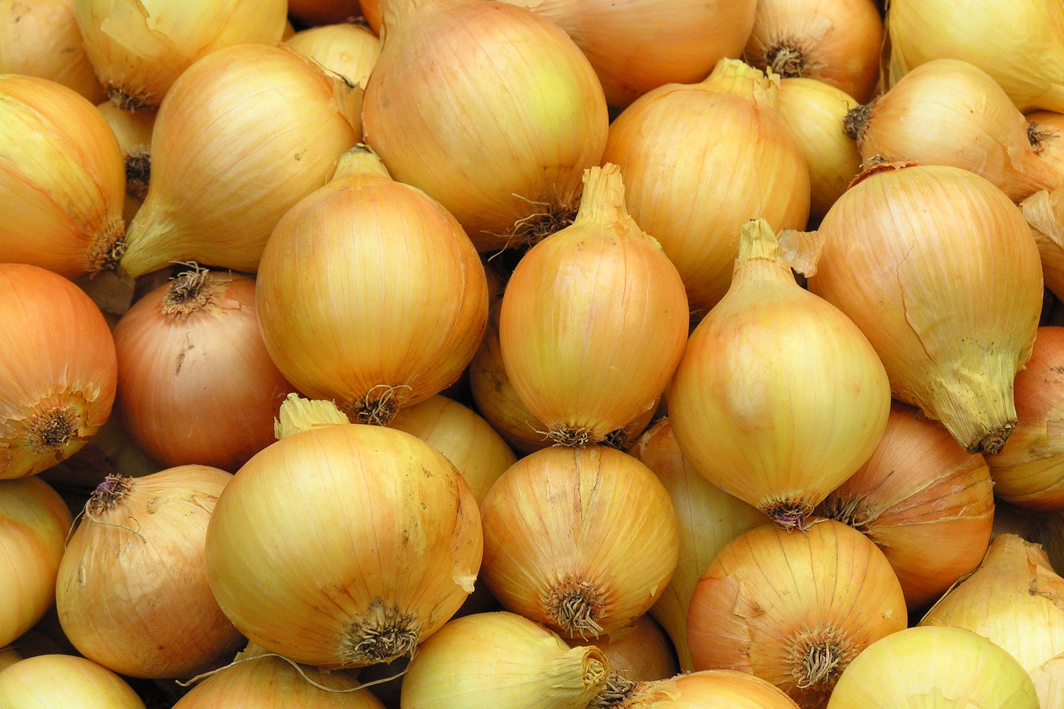 Onion Poisoning in Cats