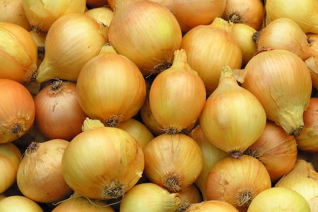 Onion Poisoning in Cats - Symptoms, Causes, Diagnosis, Treatment, Recovery, Management, Cost