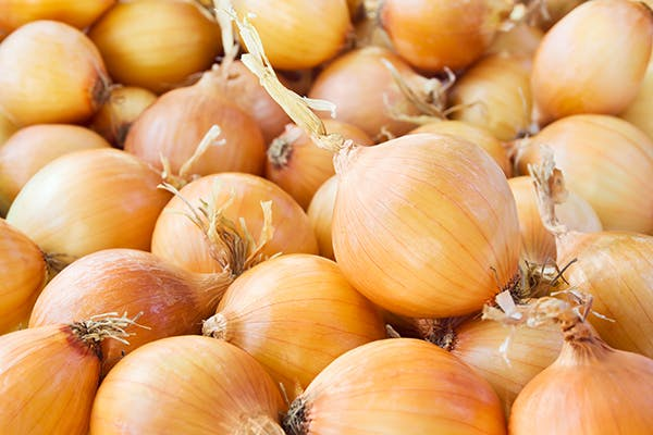 Onion Toxicity in Cats - Symptoms, Causes, Diagnosis, Treatment, Recovery, Management, Cost