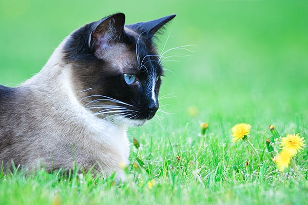 Parasitic Stomach Worm Infection in Cats - Symptoms, Causes, Diagnosis, Treatment, Recovery, Management, Cost