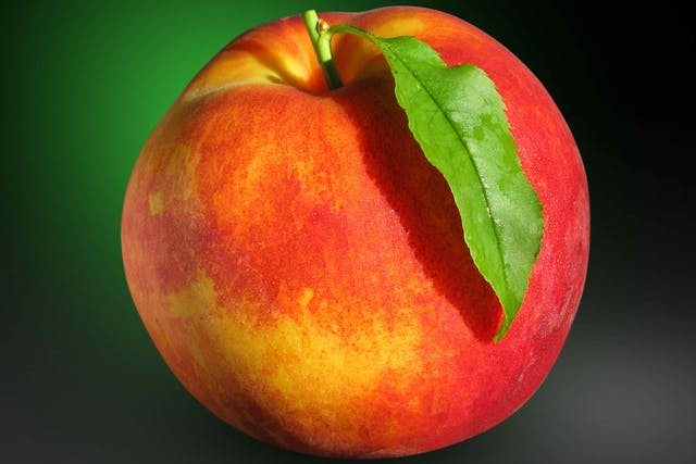 Peach Poisoning in Cats - Symptoms, Causes, Diagnosis, Treatment, Recovery, Management, Cost