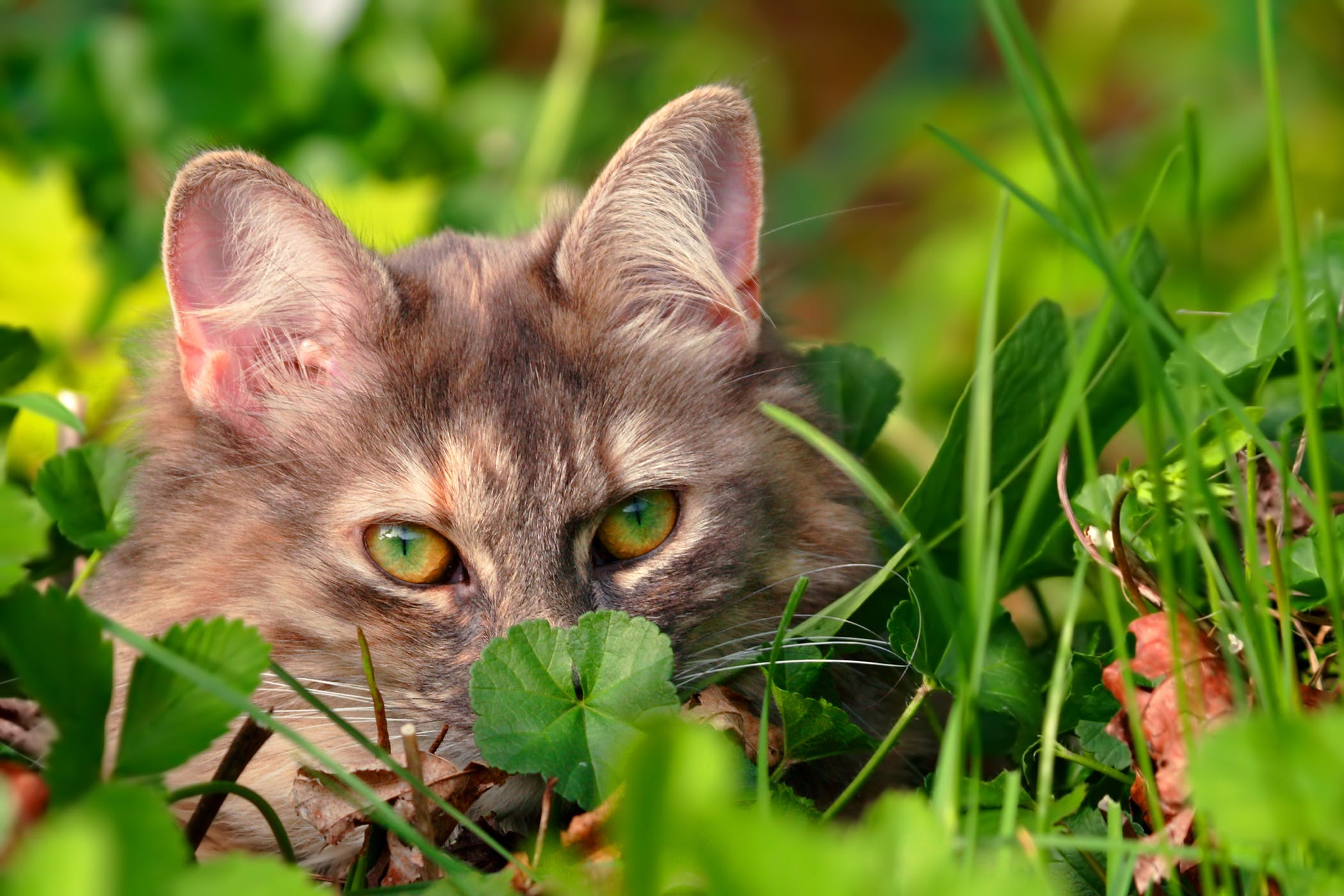 Can A Cat Develop Food Allergies