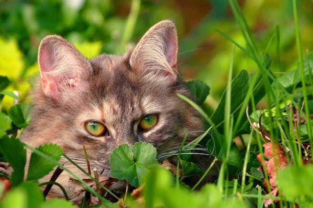 Pollen Allergies in Cats - Symptoms, Causes, Diagnosis, Treatment, Recovery, Management, Cost