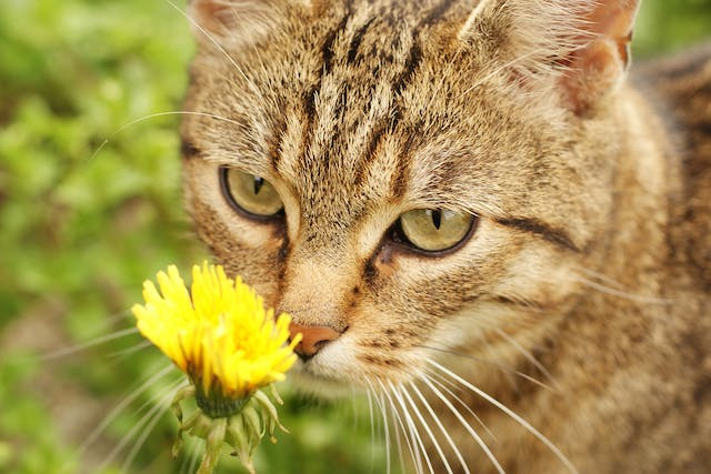 Pollen Allergy in Cats - Symptoms, Causes, Diagnosis, Treatment, Recovery, Management, Cost