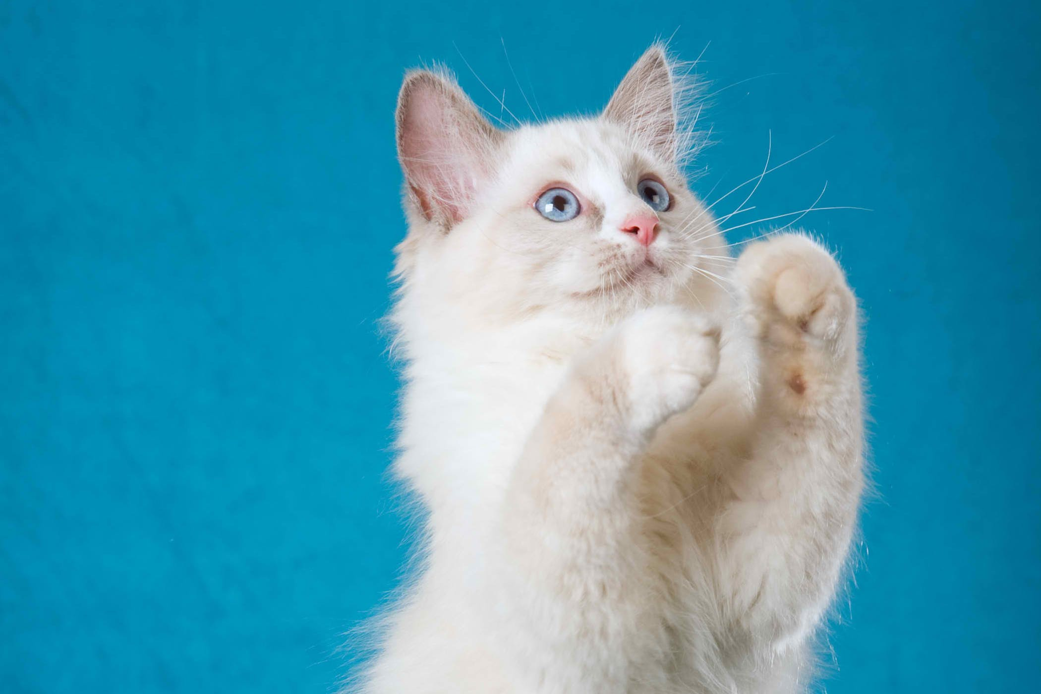 Proprioceptive Deficits in Cats