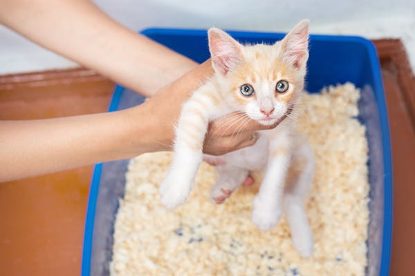 Prostate Inflammation in Cats - Symptoms, Causes, Diagnosis, Treatment, Recovery, Management, Cost