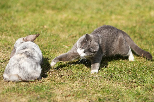 Rabbit Allergy in Cats - Symptoms, Causes, Diagnosis, Treatment, Recovery, Management, Cost