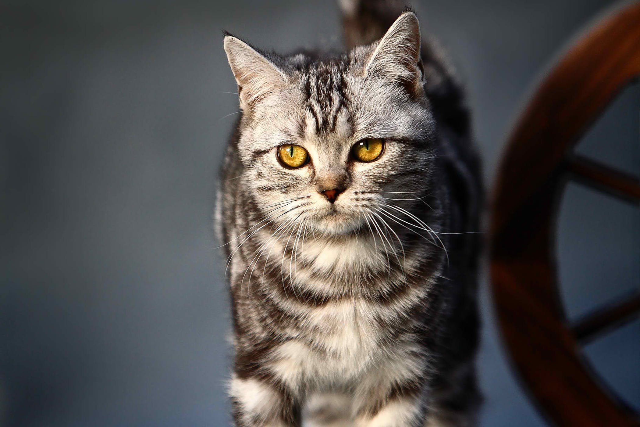 Calcevirus infection in cats: symptoms and treatment